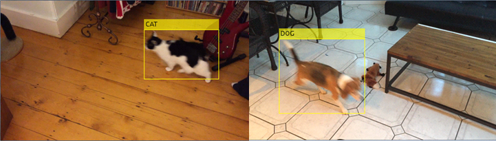 Pet detection and recognition system.