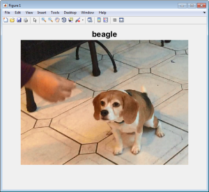 Figure 2: Pretrained ImageNet model classifying the image of the dog as 'beagle'.