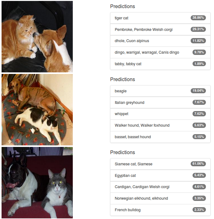 Figure 3: Alexnet classifications of images of cats and dogs from the PASCAL VOC dataset.