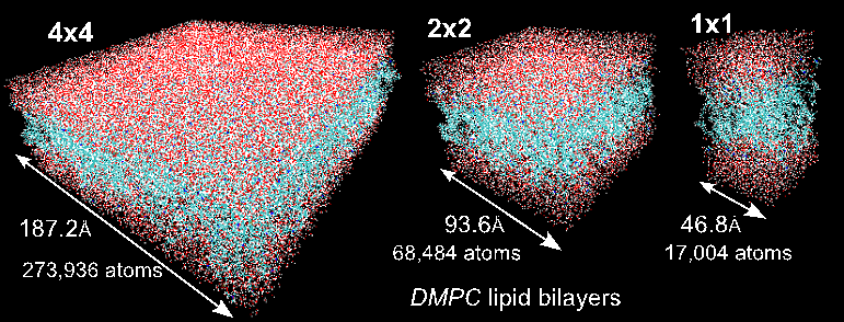 Figure 1: Visual representations of the lipid-bilayer systems. The DMPC 1x1 system describes the small system of 72 lipid molecules (36 lipids/leaflet) traditionally used for simulations on high-end clusters. DMPC 2x2 and 4x4 describe systems with 288 and 1152 lipid molecules, respectively, that we were able to study on a single GPU. Presented in Structural, Dynamic, and Electrostatic Properties of Fully Hydrated DMPC Bilayers from Molecular Dynamics Simulations Accelerated with GPUs.