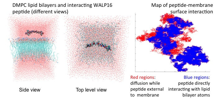 Figure 2: Study of peptide penetration and folding into membrane. For more info, see: GPU-Enabled Macromolecular Simulation: Challenges and Opportunities.