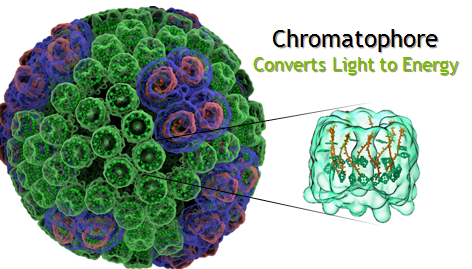 Figure 1: Researchers at University of Illinois at Urbana-Champaign simulated a 100 million atom model of a Chromatophore to understand the chemical reactions in photosynthesis.