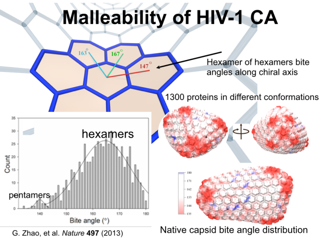 Malleability of HIV-1
