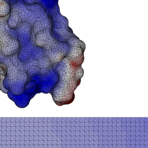 Figure 4: a close-up view of the mesh for a protein G B1 near a surface charged with 0.05 C/m^2. The colors represent the electrostatic potential on the molecular surface.