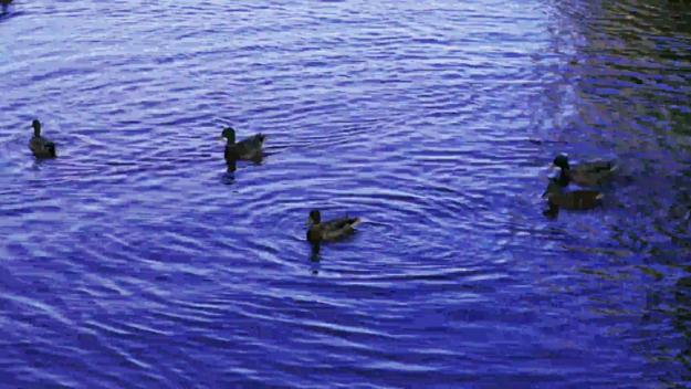 ducks take off 3840x2160 420 8 30 500.y4m libx264 ll 8M.H264 0 3840x2160 decoded